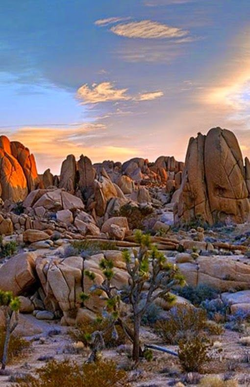 1000+ ideas about Joshua Tree National Park on Pinterest.