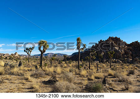 Stock Photography of HUSA, California, Joshua Tree National Park.