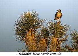Rote wüste Stock Fotos und Bilder 56.255 rote wüste Suchen Sie.