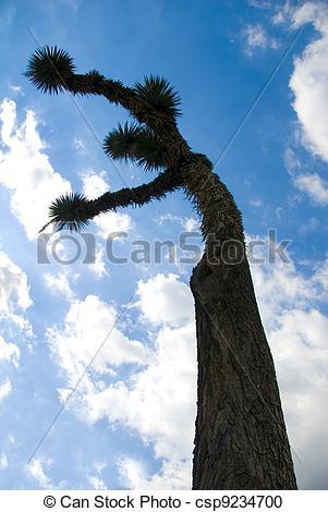 Stock Fotografie von joshua, Pflanze, Kaktus, baum.