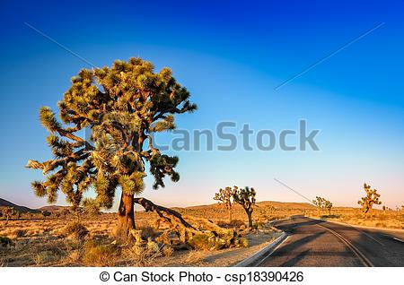 Stock Foto von joshua, baum, Sonnenuntergang, Wüste, Straße.
