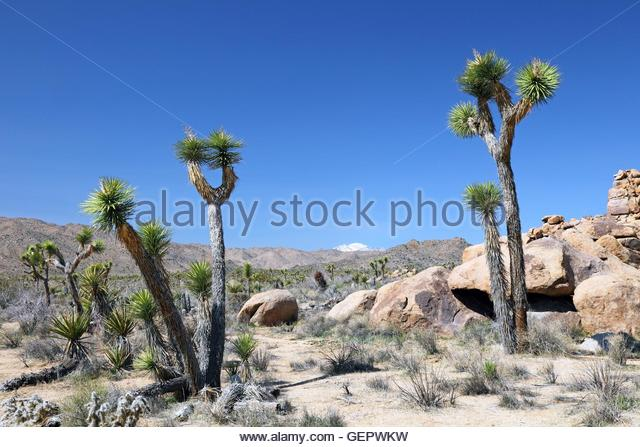 Geography Travel Usa California Palm Stock Photos & Geography.