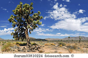 Yucca palm Images and Stock Photos. 397 yucca palm photography and.