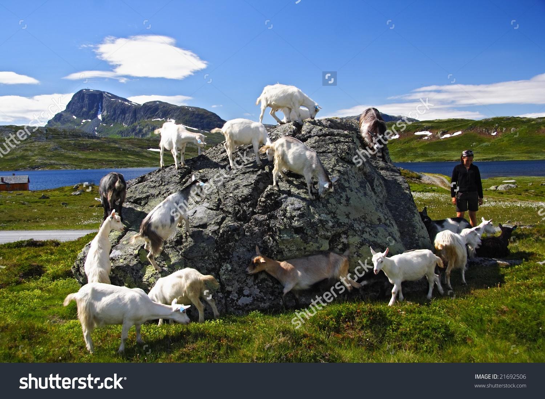 Goats Hiker Jotunheimen National Park Norway Stock Photo 21692506.