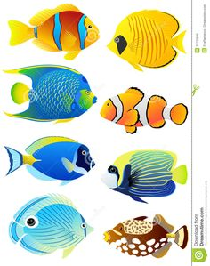 School Of Tropical Fish.