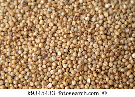 Jowar Stock Photo Images. 56 jowar royalty free pictures and.