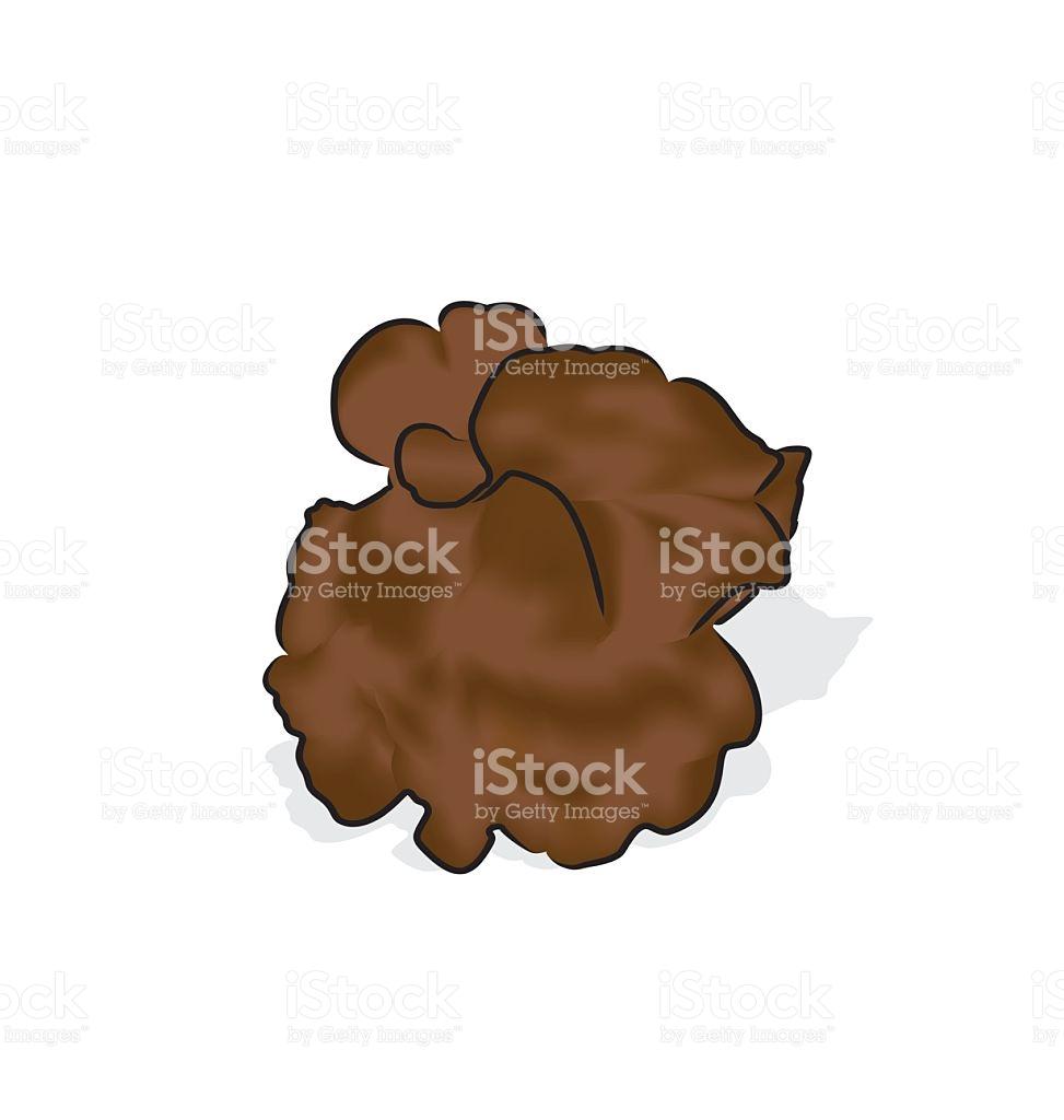 Jews Ear Mushroom stock vector art 513499802.