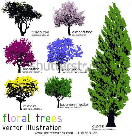 Judas Tree Stock Vectors & Vector Clip Art.