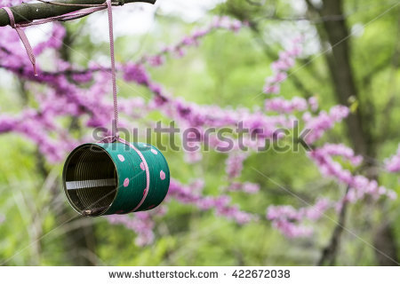 Judas Tree Stock Photos, Royalty.