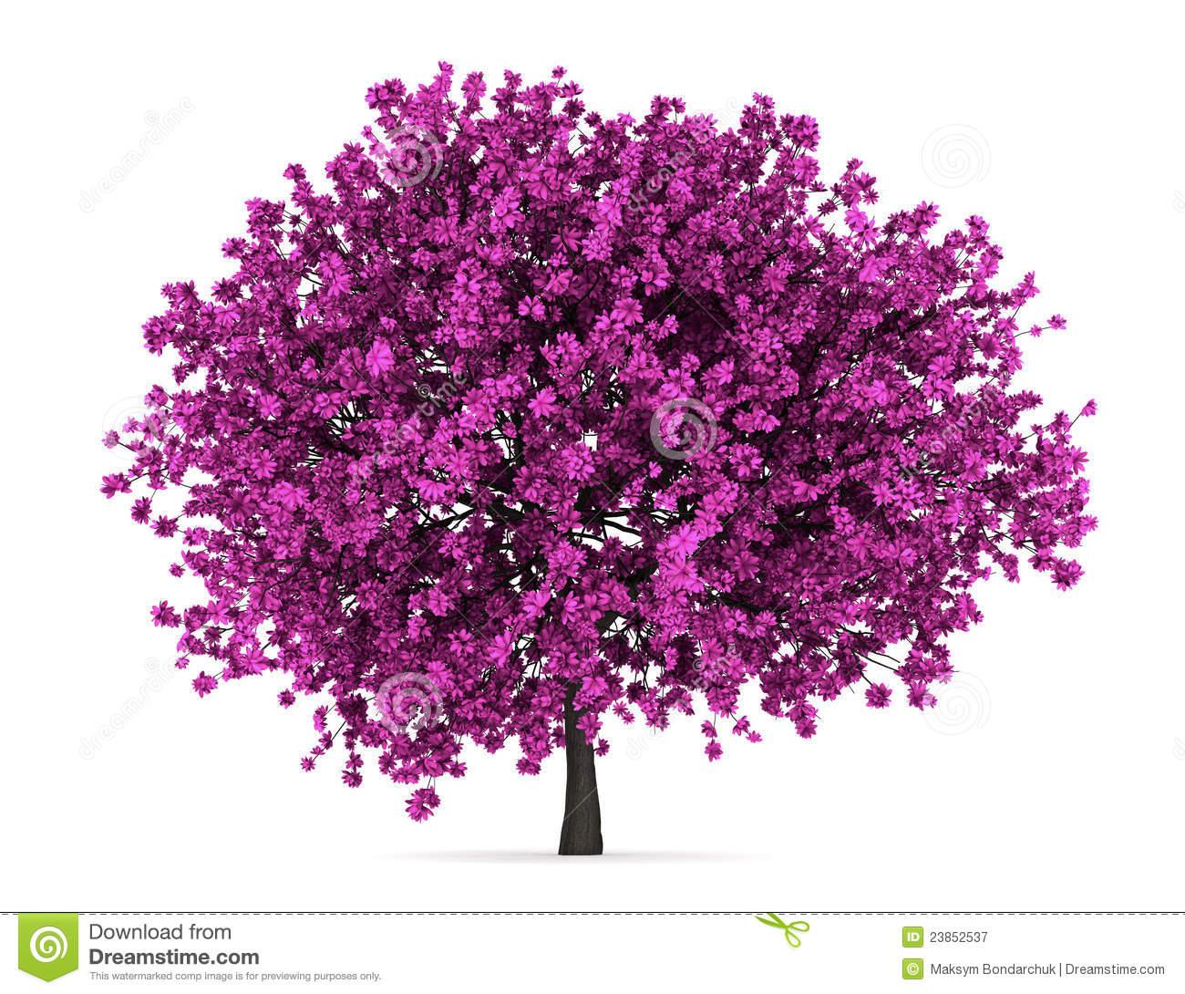Judas Tree Aka Redbud Tree Close Up Royalty Free Stock Image.