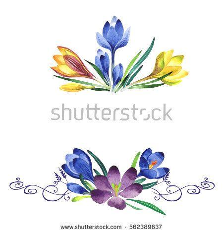 1000+ ideas about Saffron Plant on Pinterest.