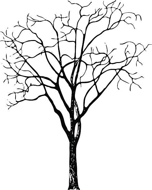 Black Walnut Tree Clip Art, Vector Images & Illustrations.