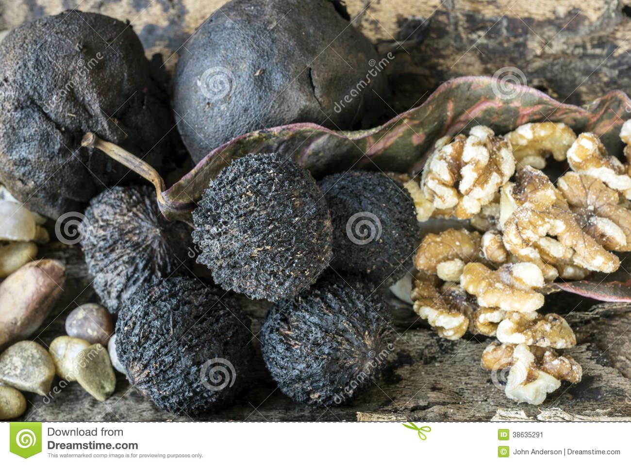 Juglans Nigra, The Eastern Black Walnut Stock Image.