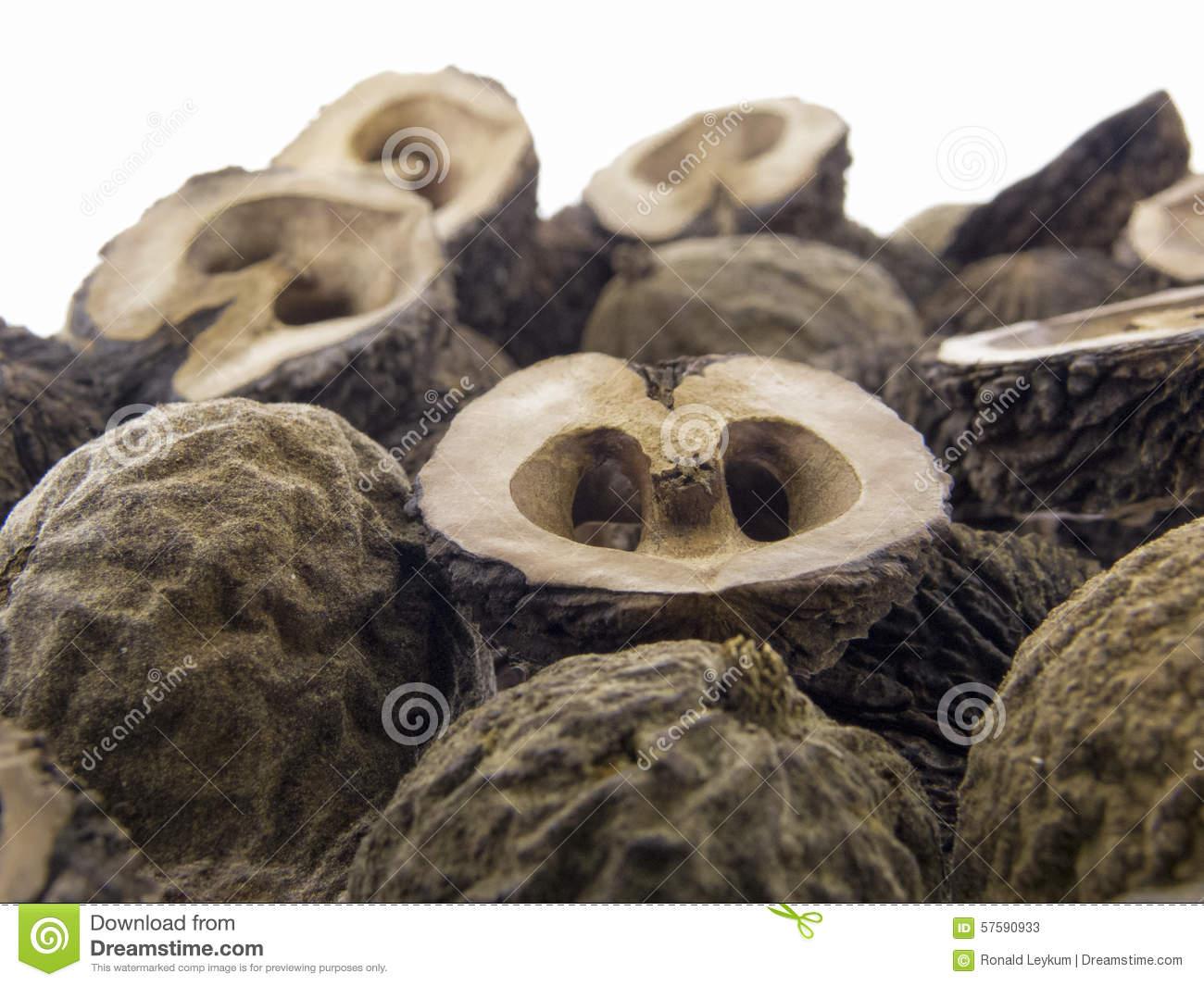 Black Walnut, Fruit Juglans Nigra Stock Photo.