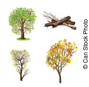 Juglans regia Illustrations and Clipart. 10 Juglans regia royalty.