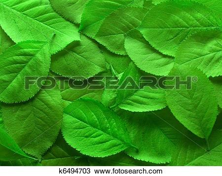 Stock Photo of Juicy green leafs k6494703.