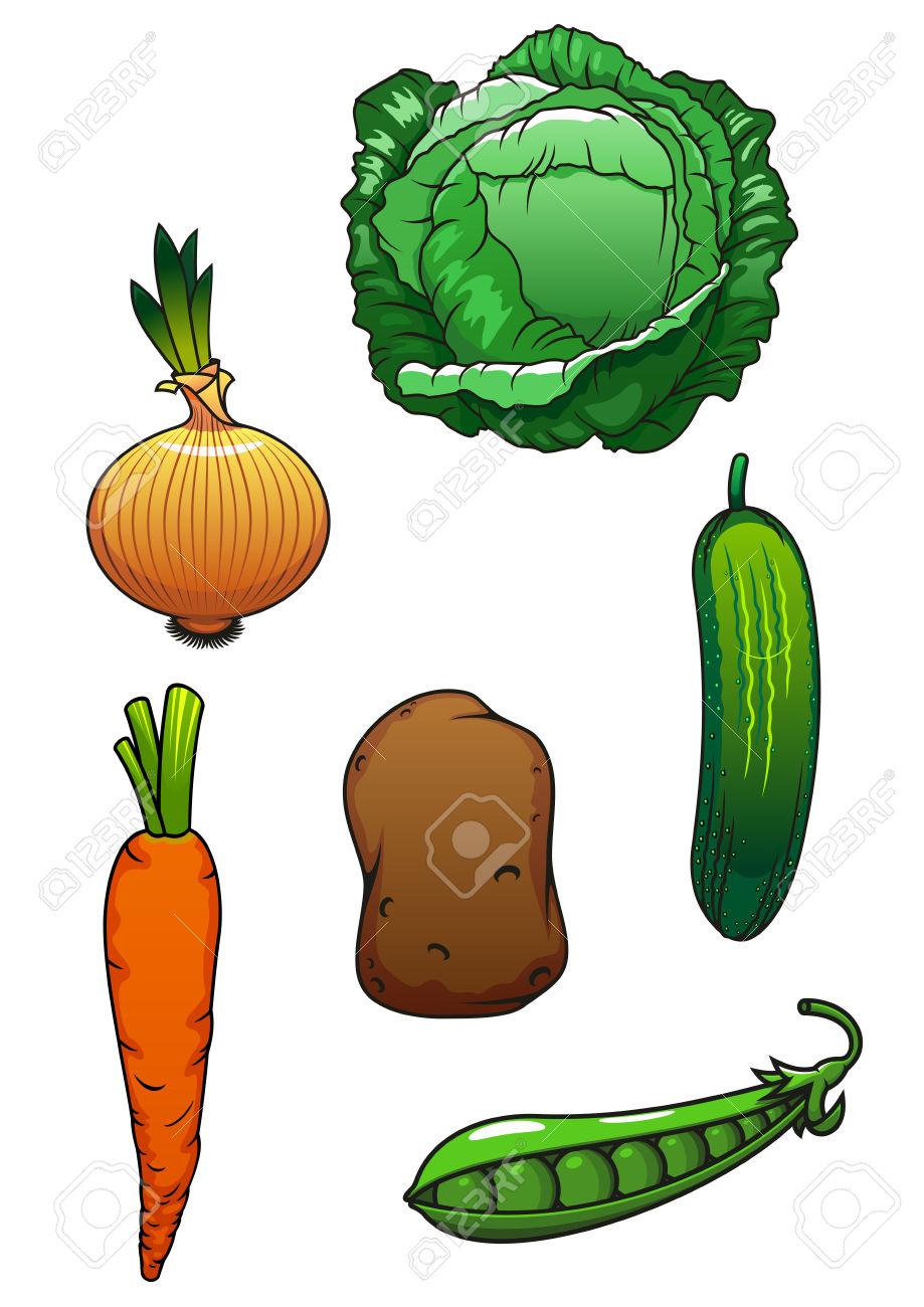 Bright Juicy Green Cucumber, Cabbage, Pea Pod, Sweet Orange Carrot.