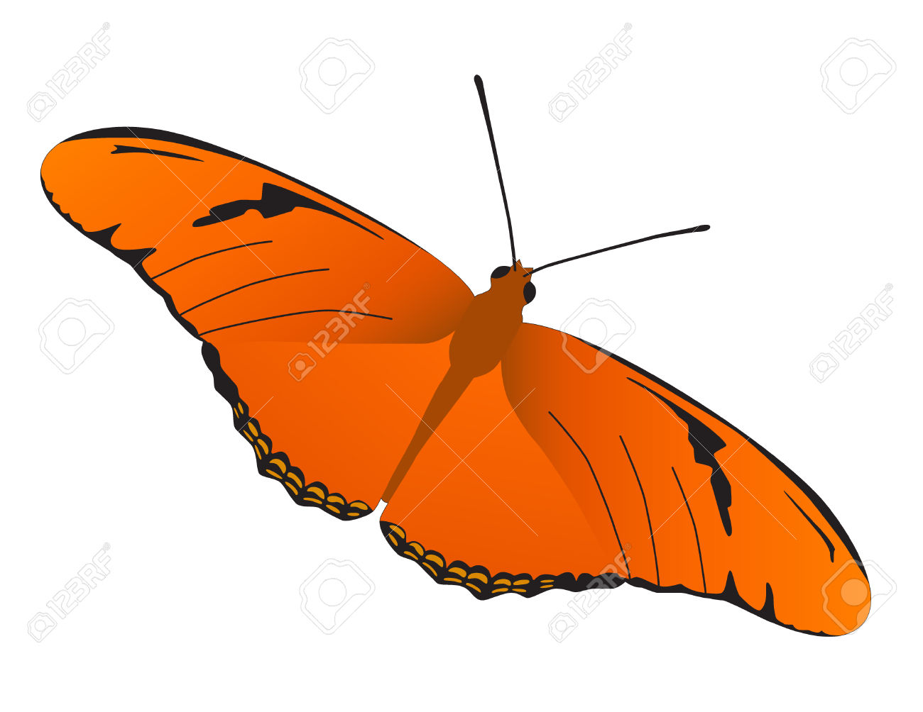 A Vector Illustration Of Julia Butterfly. Royalty Free Cliparts.