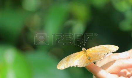 Animal Julia Butterfly Stock Photos, Pictures, Royalty Free Animal.
