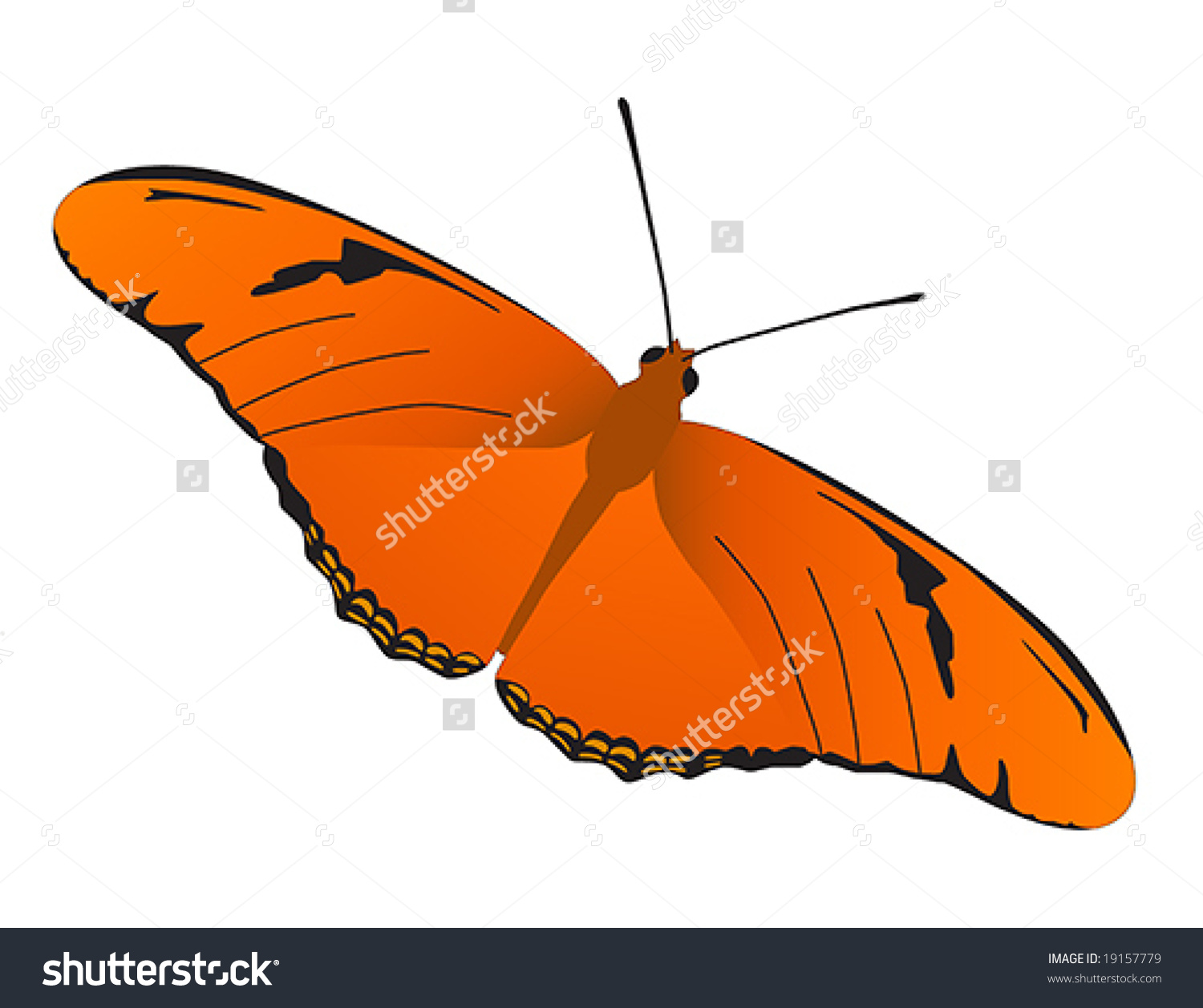 Julia Butterfly Vector Stock Vector 19157779.