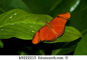 Dryas Images and Stock Photos. 191 dryas photography and royalty.