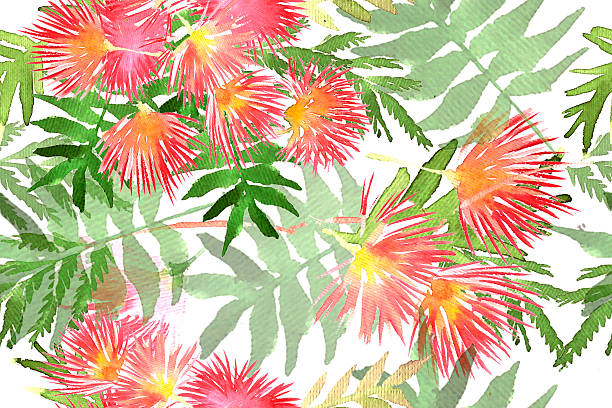 Background Of The Mimosa Trees Clip Art, Vector Images.