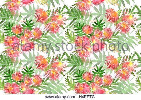 Pink Silk Tree, Persian Silk Tree Or Mimosa, Albizia Julibrissin.