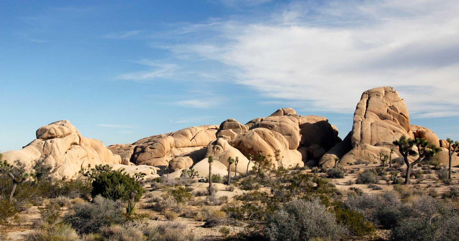 Jumbo Rocks Campground.