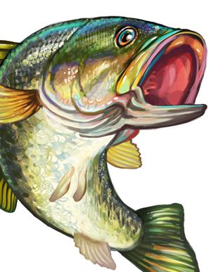 1586 Bass free clipart.