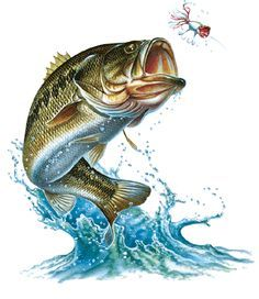 Image result for bass jumping out of water.