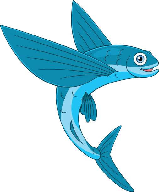Best Flying Fish Illustrations, Royalty.