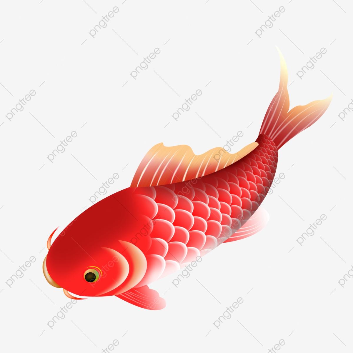 Jumping Fish, Fish Clipart, Free, Jump PNG Transparent Clipart Image.