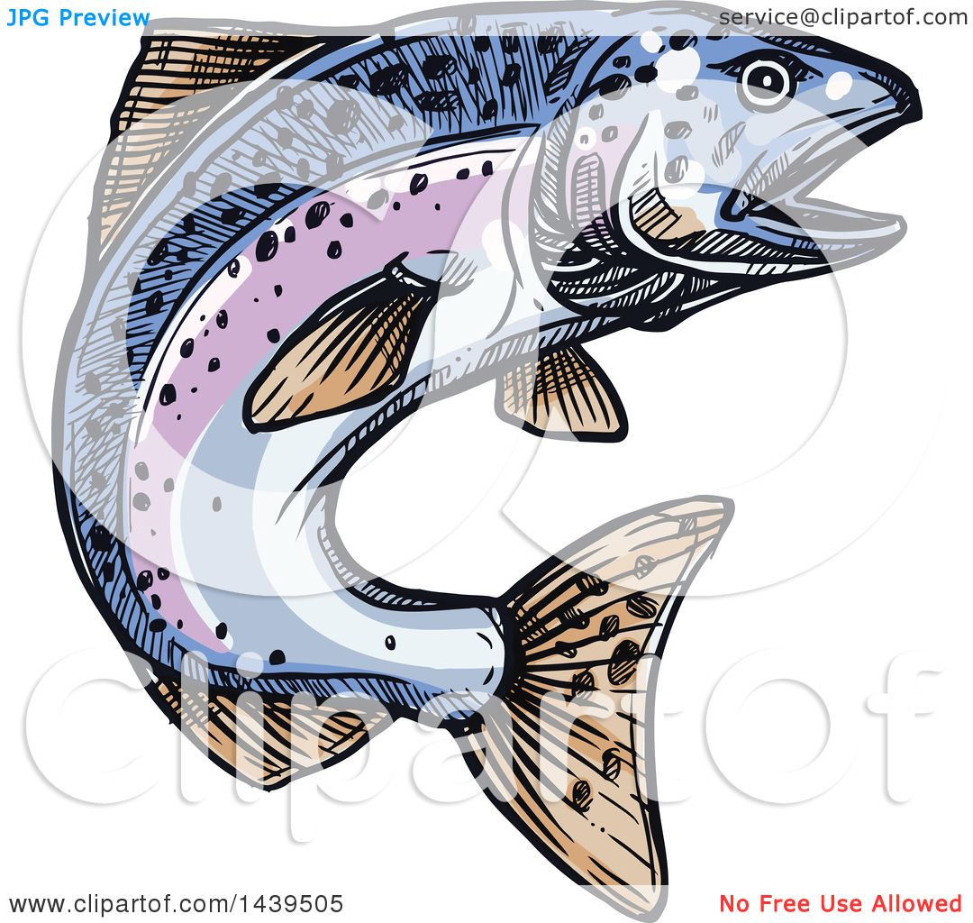 Clipart of a Sketched and Colored Jumping Salmon Fish.