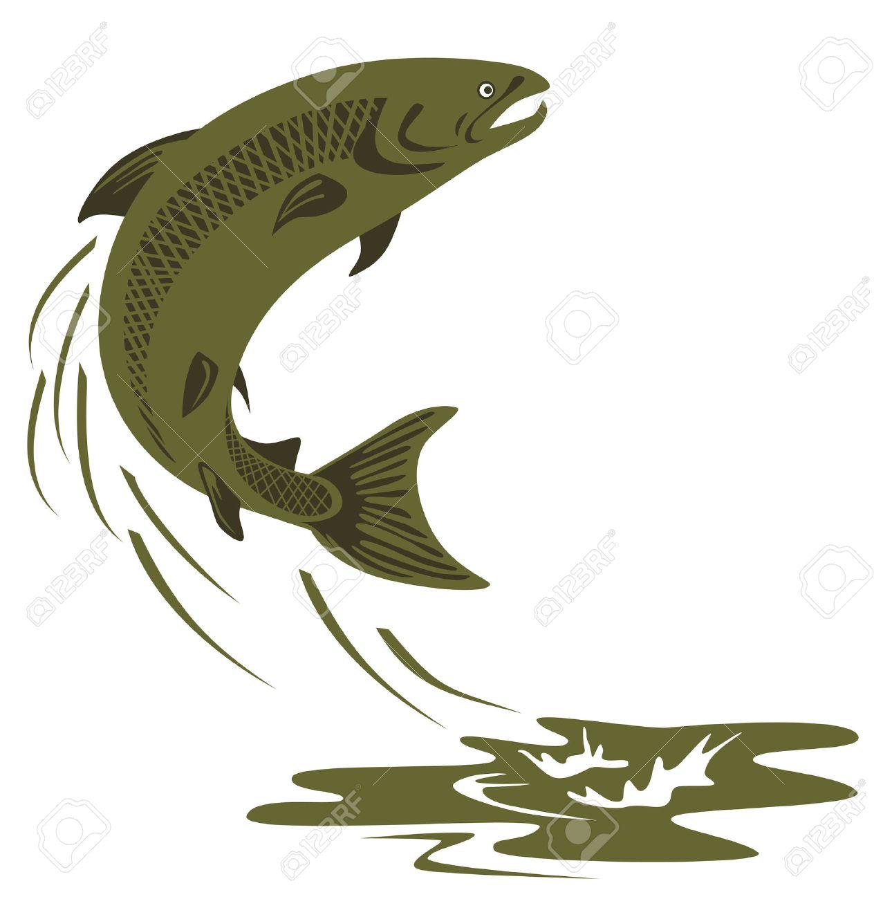Atlantic salmon leaping.