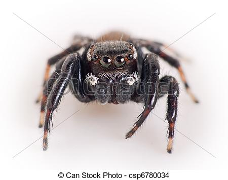Jumping spider clipart.