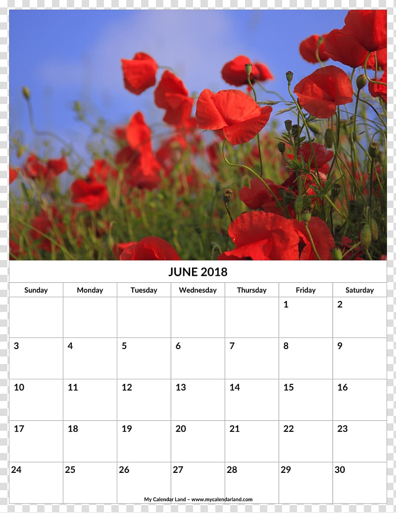 Common poppy Remembrance poppy Desktop Opium poppy, june.
