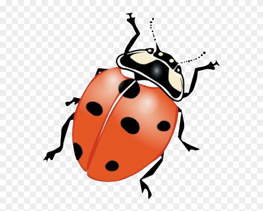 Graphic Freeuse Stock Beetle Clipart June Bug.