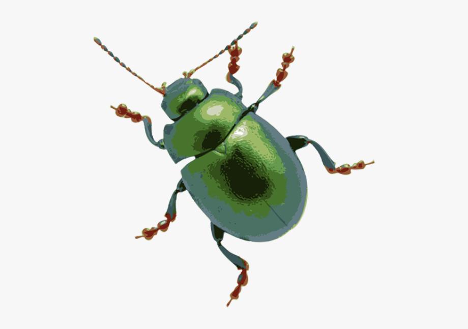 Clip Art Of A June Bug Dixie Allan Clipart Clipart.