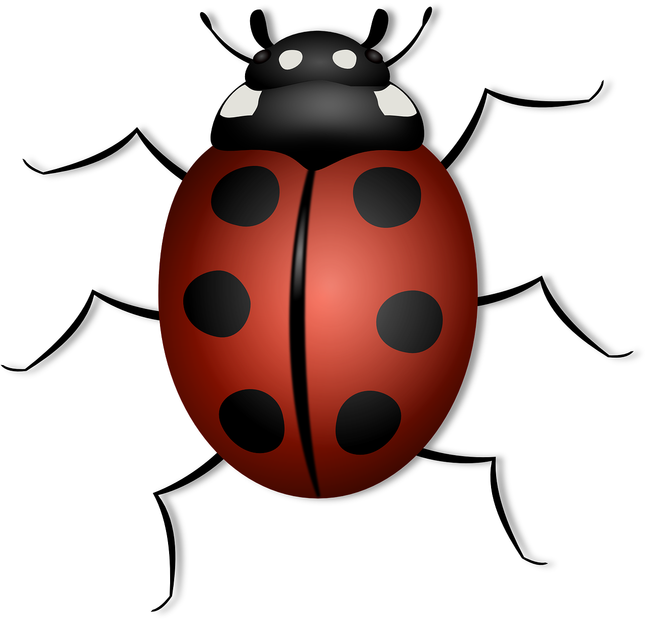 June bug clipart clipart images gallery for free download.