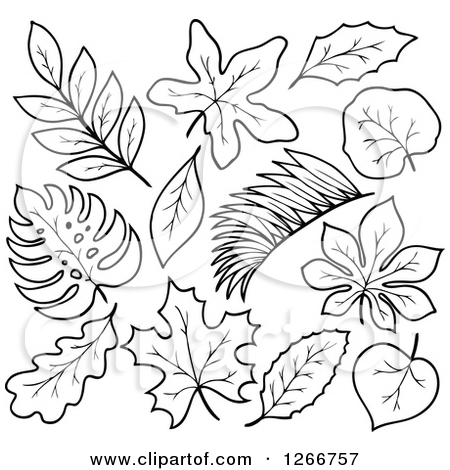 Jungle Leaves Black And White Clipart.