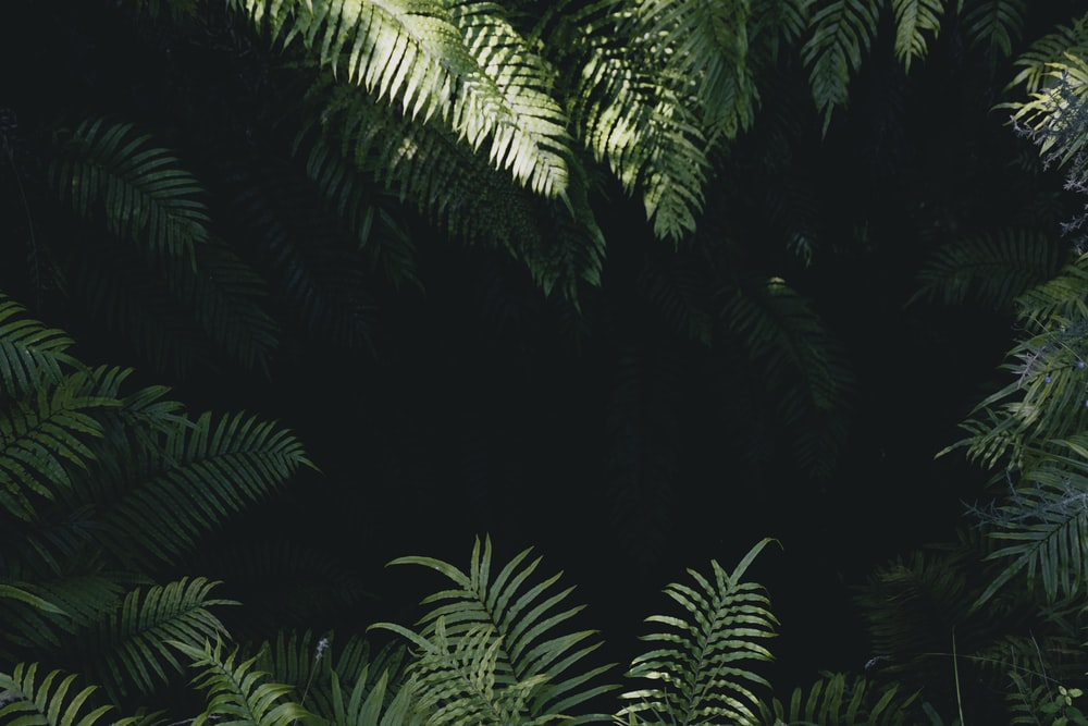 Best 20+ Jungle Pictures.