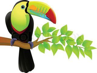 toucan bird in the jungle.