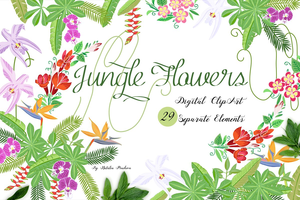Jungle clipart with flowers ~ Illustrations ~ Creative Market.
