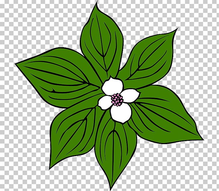 Jungle Tropical Rainforest Plant PNG, Clipart, Artwork, Cartoon, Cut.