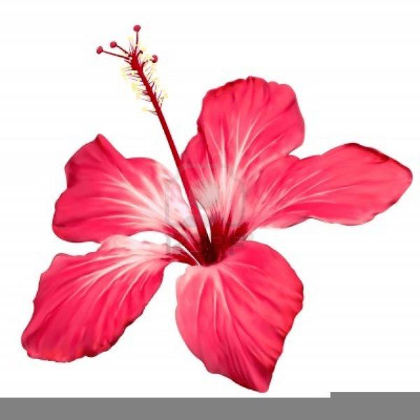 Jungle flowers clipart 1 » Clipart Portal.
