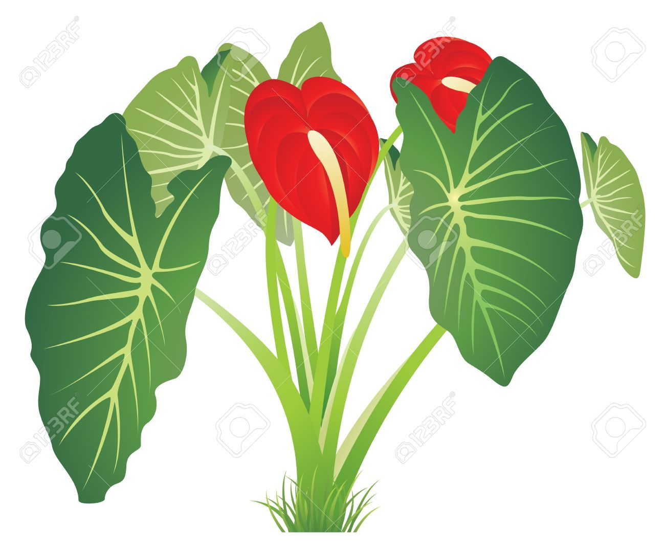 Image result for clipart images of jungle plant.