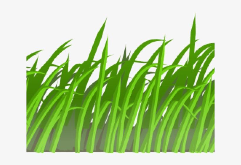 Sea Grass Clipart Jungle Grass.