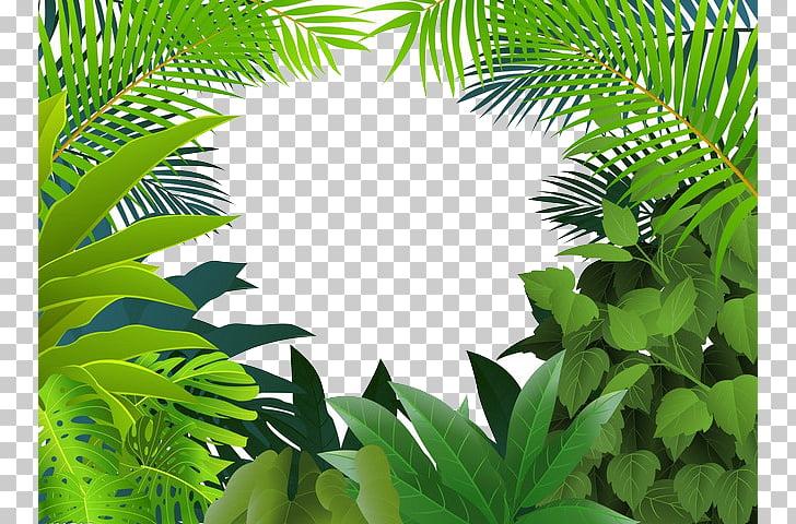 Tropical rainforest Jungle Tropics , Yin green grass, green.