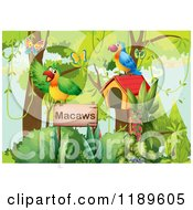 Cartoon Of Macaws With a Bird House and Sign.