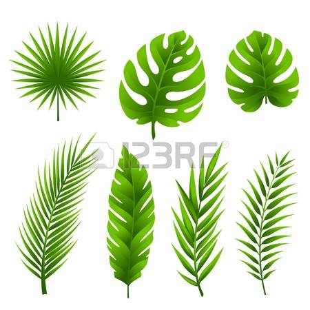 114,274 Jungle Leaves Stock Vector Illustration And Royalty Free.